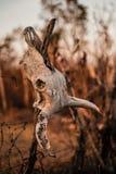 Schädel auf dem Zaun Lizenzfreies Stockfoto