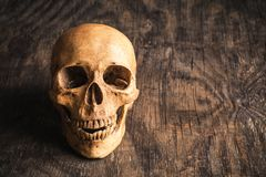 Schädel auf einem alten hölzernen Hintergrund Lizenzfreie Stockbilder