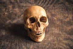 Schädel auf einem alten hölzernen Hintergrund Stockfoto