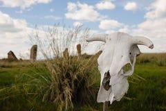 Schädel auf einem Stock Stockbild