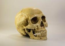Schädel auf weißem Hintergrund Stockbilder