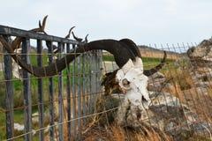 Schädel auf Zaun Stockbild