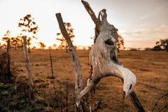 Schädel bei Sonnenuntergang Stockfoto