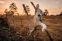 Schädel bei Sonnenuntergang Lizenzfreies Stockfoto
