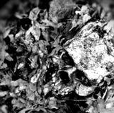 Schädel in den Blättern stockbilder