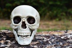 Schädel, der auf Klotz sitzt Stockfotografie
