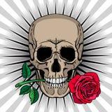 Schädel, der eine Rose in seinem Mund hält Stockbild
