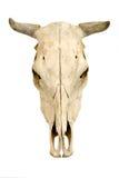 Schädel der Kuh Stockfotos