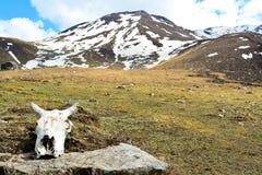 Schädel des Himalajasteinbocks mit Bergen im Hintergrund stockbilder
