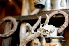 Schädel des kleinen Nagetiers und der Hörner des Säugetieres Lizenzfreie Stockfotos
