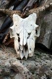 Schädel einer Ziege auf einem Felsen Lizenzfreies Stockfoto