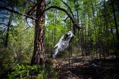 Schädel eines Pferds auf einem Baum Stockfoto