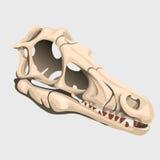 Schädel eines unbekannten Tieres, altes Fossil Stockfotografie