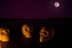 Schädel, Halloween-Hintergrund Stockfotografie