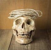 Schädel mit Seilstillleben auf hölzernem Hintergrund Lizenzfreie Stockfotografie