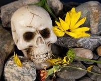 Schädel und Blumen Stockbilder