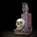 Schädel und Eule auf alten Büchern Stockbilder