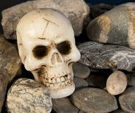 Schädel und Felsen stockbild