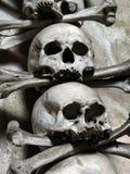 Schädel und Knochen Lizenzfreie Stockfotos