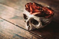 Schädel und Rosen Stockbild