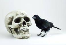 Schädel und schwarze Krähe Stockbilder