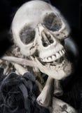 Schädel und Schwarzrose Stockbild