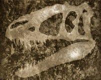 Schädel von Tyrannosaur auf Felsen lizenzfreie stockfotos