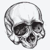 Schädel-Zeichnung Lizenzfreie Stockfotos