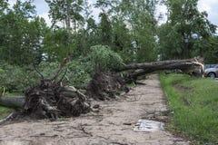 Schäden nach dem Sturm und einem Hurrikan Stockfotografie