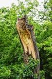Schädigender Baum Stockfoto