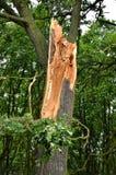 Schädigender Baum Lizenzfreies Stockbild