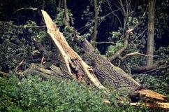 Schädigender Baum Lizenzfreies Stockfoto