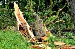 Schädigender Baum Lizenzfreie Stockfotos