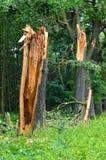Schädigender Baum Stockfotografie