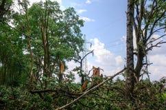 Schädigender Baum und elektrischer Pfosten Stockbild