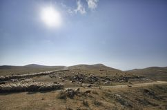 Schäfer-Antriebe auf dem Berg verlegen ein attara von Schafen, das Wüstenberggebiet, Aserbaidschan Stockfoto