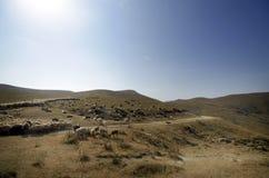 Schäfer-Antriebe auf dem Berg verlegen ein attara von Schafen, das Wüstenberggebiet, Aserbaidschan Lizenzfreie Stockfotos