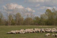 Schäfer With Sheep lizenzfreies stockfoto