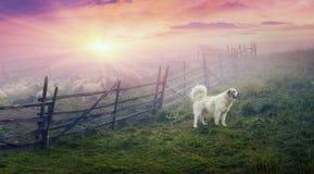 Schäfer und Schafe Lizenzfreie Stockfotos