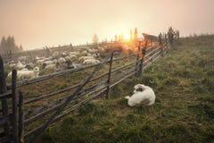 Schäfer und Schafe Lizenzfreies Stockbild