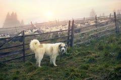 Schäfer und Schafe Stockbild
