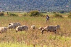 Schäfer und Schafe heraus in der Natur für einen Weg Stockbild