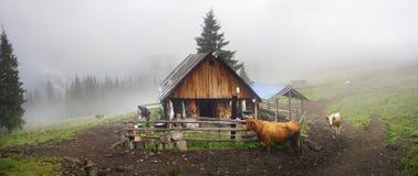 Schäfer und Schafe Karpaten Stockbilder