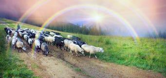 Schäfer und Schafe Karpaten Lizenzfreie Stockfotos