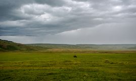 Schäfer zu Pferd auf dem Gebiet stockfotografie