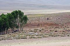 Schäferhund bei Marokko Stockfotos