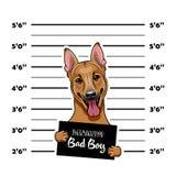 Schäferhund Dog Gefangener, Strafgefangene Hundeverbrecher Polizei beklebt, Polizei Mugshot, Aufstellung mit Plakaten Festnahmefo lizenzfreie abbildung