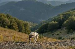 Schäferhund durch Straße an Beklemeto-Durchlauf Lizenzfreies Stockfoto