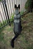 Schäferhund am Gatter Stockbild