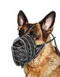 Schäferhund im muzzl Lizenzfreies Stockfoto